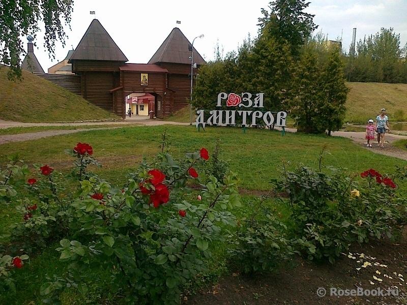 Около 1,7 млрд руб. вложат в расширение комплекса по производству роз в Дмитрове