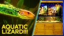 Aquatic Lizard — Giant $7,000 Paludarium