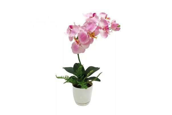 Чеснок просто находка для шикарного цветения... Есть такие нежные и прекрасные цветы с не менее нежным и прекрасным названием «Орхидея». Но лишь те кто попробовал вырастить у себя эту красотку,