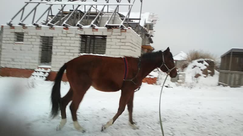 Капитон декабрь 18 1год и 8 мес