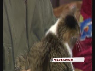 Мужчина приютил у себя 36 котиков, которых бросили дачники
