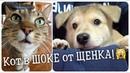 Бездомный щенок улетел в Новосибирск и объел кота! Кот в шоке...