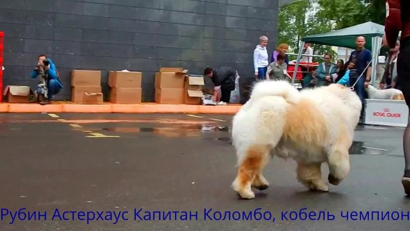 Выставка Дог вернисаж, Екатеринбург, 09.07.2017
