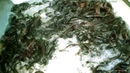 More Profitable Cat fish cultivation অধিক লাভজনক দেশি শিং মাছ চাষ