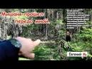 Рыбалка на лесной речке След медведя На пути к трофею