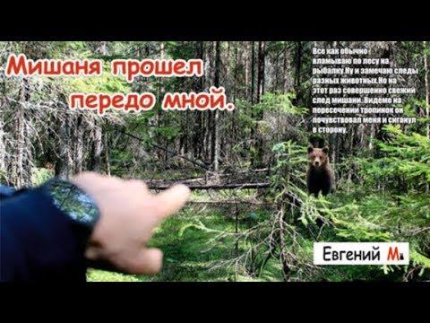Рыбалка на лесной речке | След медведя | На пути к трофею