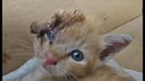 Incredible Wounded Kitten Rescue Story (Amazing Transformation) Emotional &amp Inspiring #2019