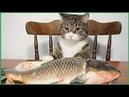 Gatti pazzi ✪ Gatti divertenti ✪ Prova a non ridere 29