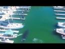 Грация и мощь Одновременно Кит заплыл в бухту