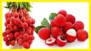 Para Qué Sirve la Fruta llamada Lichi, Niches o Litchi - Beneficios y Contraindicaciones