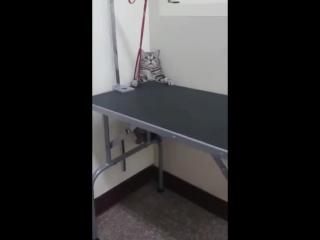 Очень жидкий кот