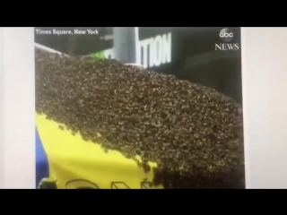 I guess bees enjoy a good NewYork hot dog as much as I do! So much that they shut down par