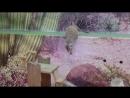 В контактном зоопарке часть 1