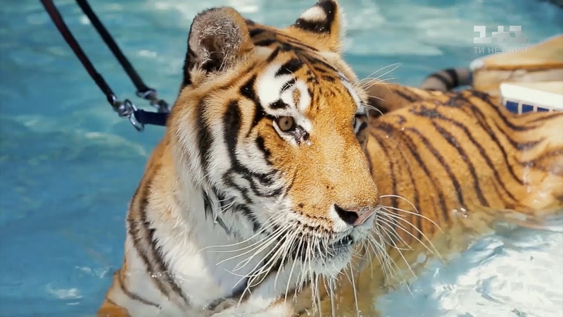 Особняк для тигров и опасные исследования кайманов. Бразилия. Мир наизнанку 10 сезон 14 выпуск