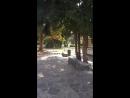 Torino park valentino