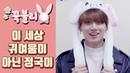 BTS Jung Kook 이 세상 귀여움이 아닌 정국이 포인트