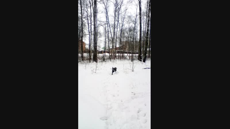 Зимняя тренировка в лесу 3