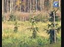 Более двух тысяч саженцев высадили в Диковском участковом лесничестве Вологодского района в рамках акции Живи, Лес