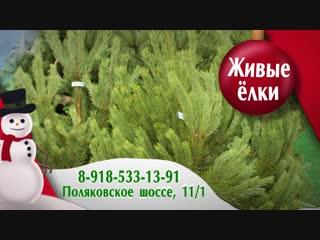 Ёлочный базар, Поляковское шоссе, 11/1 8-918-533-13-91