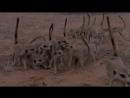 Битва за Арктику Болота смерти Тайна Велесовой книги Выпуск 193 17 09 18 Загадки человечества