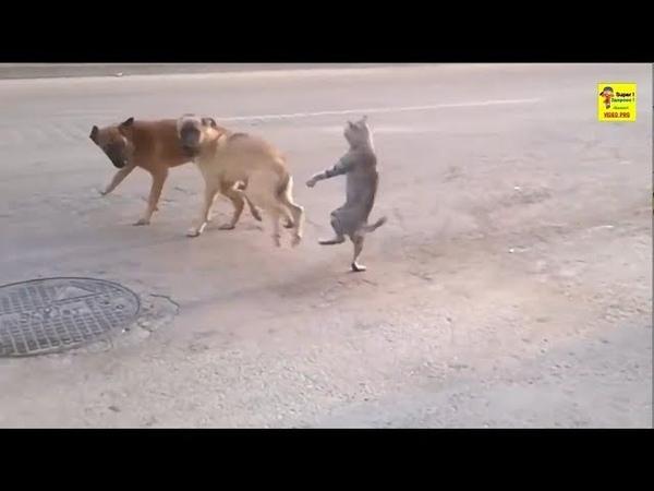 Убойные приколы, злые коты