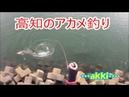 「アカメ釣り23」で衝撃映像‼【Akame】アカメとの戦い,怪魚を仕留めた釣り