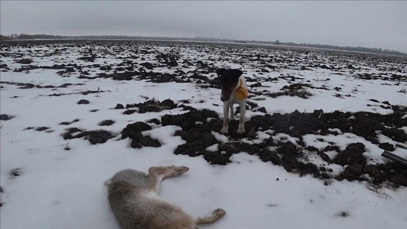 (18) зайцы мороз немного стеба (бакс продакшн и гоп компания)