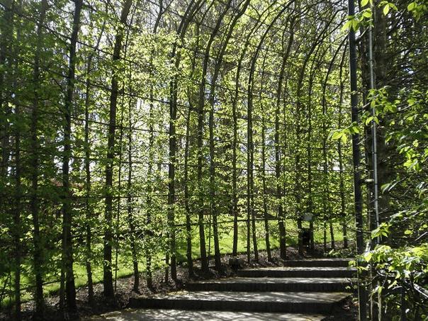 Алник: уникальный ядовитый сад