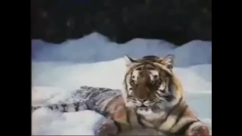 Рекламные заставки (Рен-ТВ, зима 2007-2008)