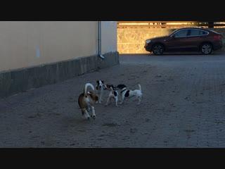 Глаша, Тося, Джекки и Кеш....