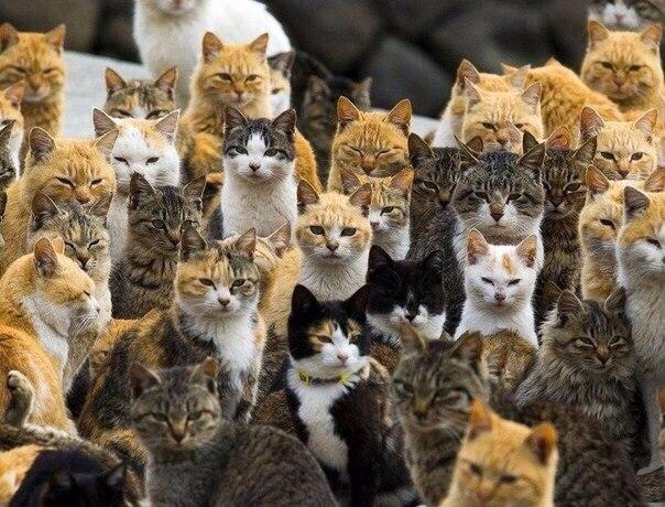 Остров Аосима (Aoshima) один из десятков «кошачьих островов» Японии. На нем живут 120 котов, что в шесть раз больше, чем людей. Благодаря снимкам, сделанным фотографом Томасом Петером (Thomas