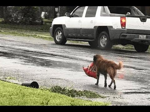 Пёс не отчаивался и упорно тащил тяжёлый пакет до самого порога. Вот что в нем было!