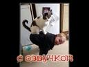 Приколы с котами и смешная озвучка животных – УГАРные котаны и кошки от PSO