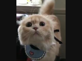 Просто кот ест помидор