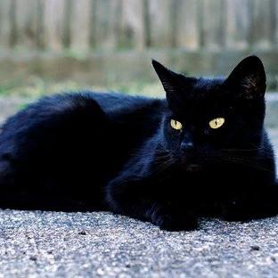 Почему в квартире кошки долго не живут, не приживаются Кошки это самые знакомые и самые загадочные зверьки, они бывают ласковыми и игривыми, они не могут жить без человека и поэтому кажется