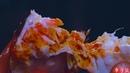 Exquisite drunken crabs: freshness known only when drunk玲珑熟醉蟹:醉过才知熟蟹鲜 Liziqi channel