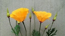 ABC TV   How To Make California Poppy Paper Flowers From Crepe Paper - Craft Tutorial