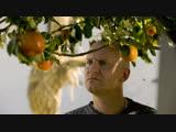 Адамовы яблоки / Adams æbler / Андерс Томас Йенсен, 2005 (драма, комедия, криминал)