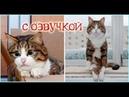 Приколы с котами – ОЗВУЧКА ЖИВОТНЫХ от DOMI SHOW – ПОПРОБУЙ НЕ ЗАСМЕЯТЬСЯ