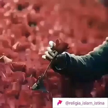 Adi_gabbas video
