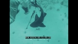 SCUBA DIVING IN THE CARIBBEAN SEA 1950s SPEAR FISHING, UNDERWATER EXPLORATION FILM 63374
