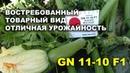 Кабачок GN 11-10 F1. Востребованный товарный вид, отличная урожайность