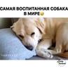 """ТВОЙ ЗАРЯД УДАЧИ И ПОЗИТИВА 😼 on Instagram """"А у Вас есть собака🐶😊👇"""""""