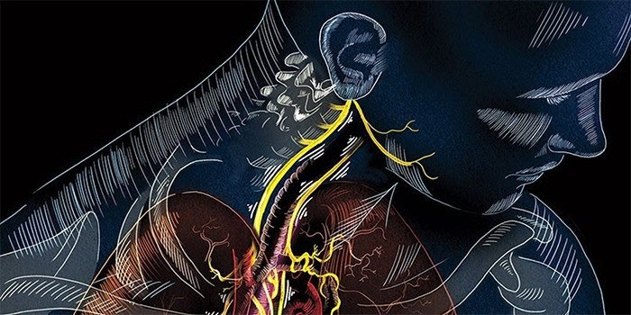 Какова функция блуждающего нерва?