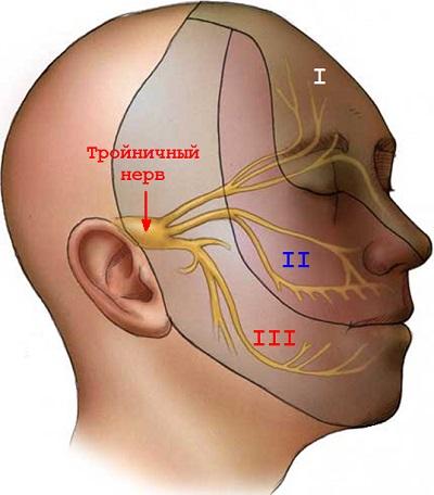 Блуждающий нерв - самый длинный из черепных нервов.
