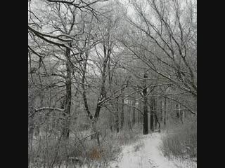 Зимний день и Рич.
