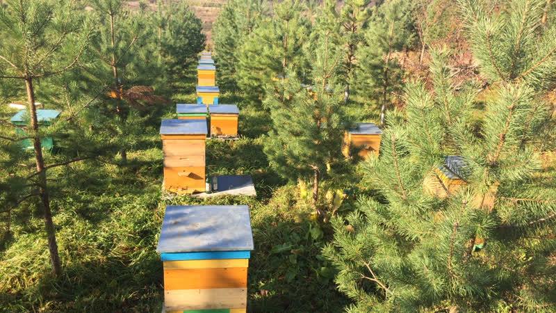 Облёт пчёл на одной из пасек президента ассоциации