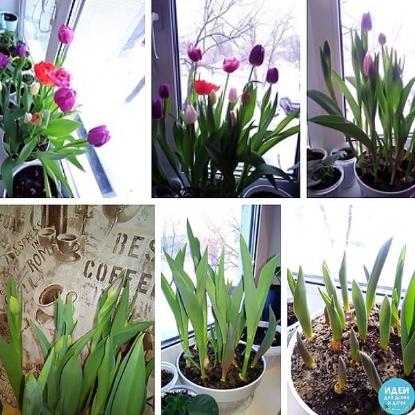 За окном зима, а дома весна! Фото Татьяны Смирновой
