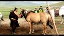 B.Boldbaatar CTA - nutgaa gvisen ajnai