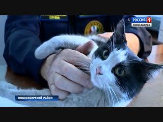Спасенный из огня котенок Гидрант стал символом пожарной части в Мочище
